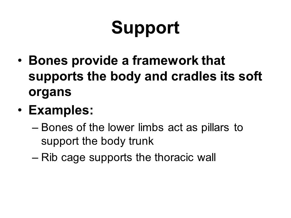 Support Bones provide a framework that supports the body and cradles its soft organs. Examples:
