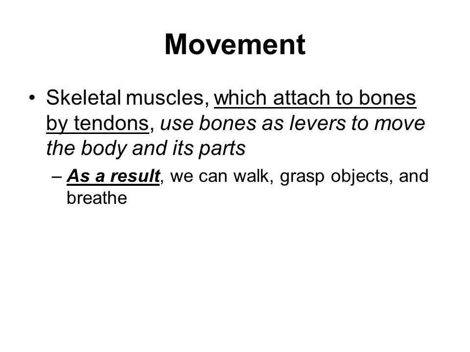 Movement Skeletal muscles, which attach to bones by tendons, use bones as levers to move the body and its parts.