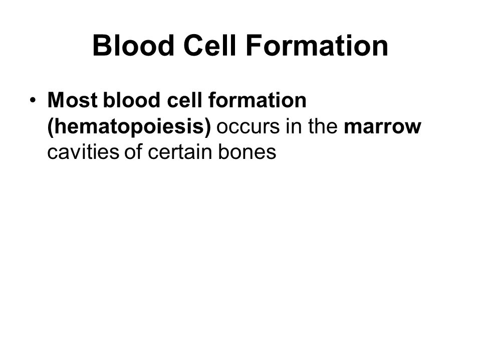 Blood Cell Formation Most blood cell formation (hematopoiesis) occurs in the marrow cavities of certain bones.