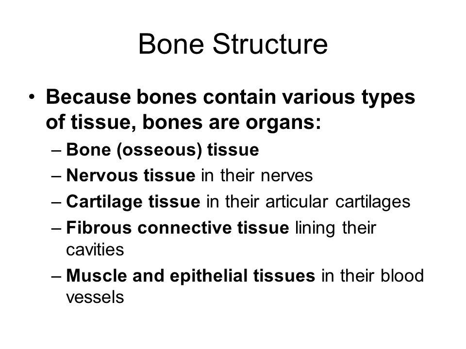 Bone Structure Because bones contain various types of tissue, bones are organs: Bone (osseous) tissue.