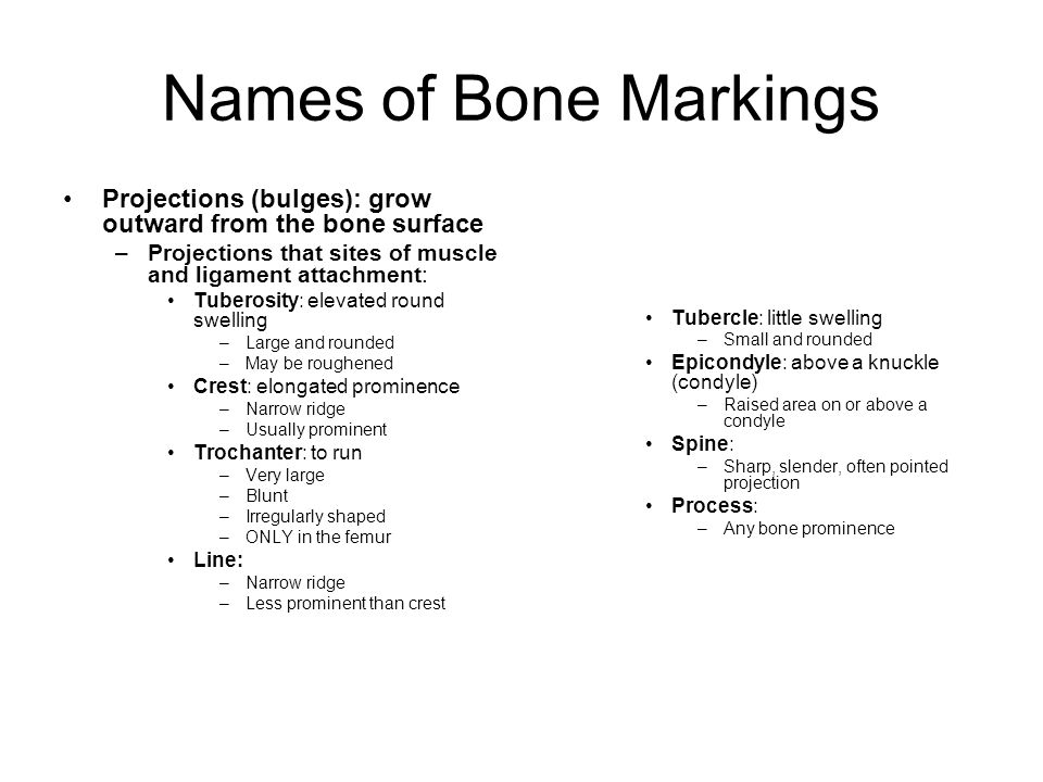 Names of Bone Markings Projections (bulges): grow outward from the bone surface. Projections that sites of muscle and ligament attachment: