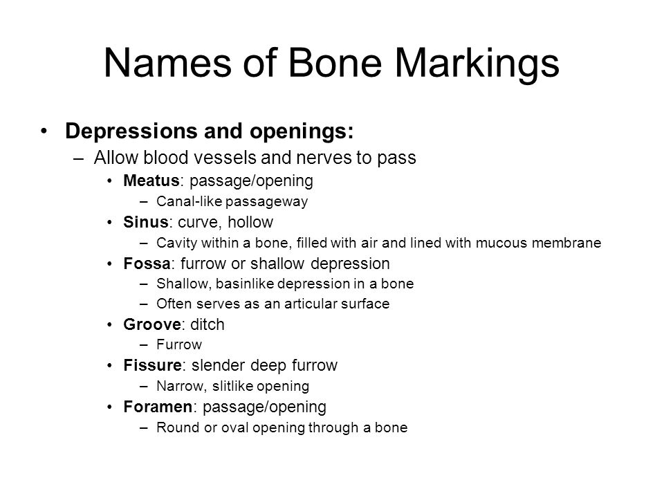 Names of Bone Markings Depressions and openings: