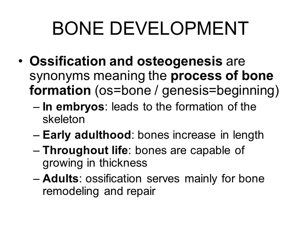 BONE DEVELOPMENT Ossification and osteogenesis are synonyms meaning the process of bone formation (os=bone / genesis=beginning)