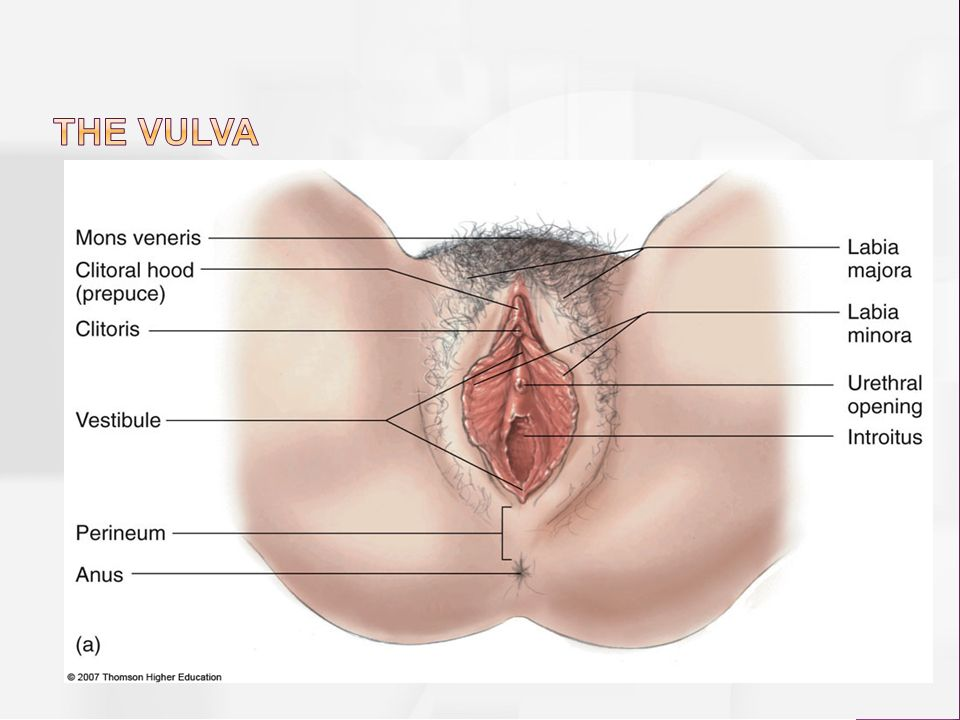 Colors of the vulva