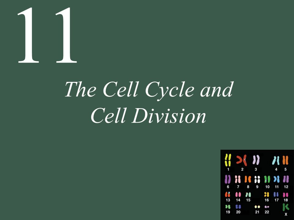 The Cell Cycle and Cell Division - ppt download