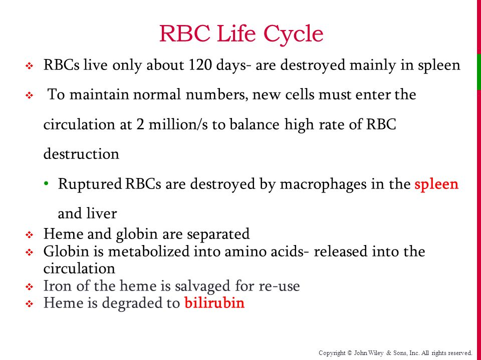 life cycle of rbc Life-cycle information management and acquisition for blood products by 21 the life cycle of blood products from table 8 temperature parameters for rbc.