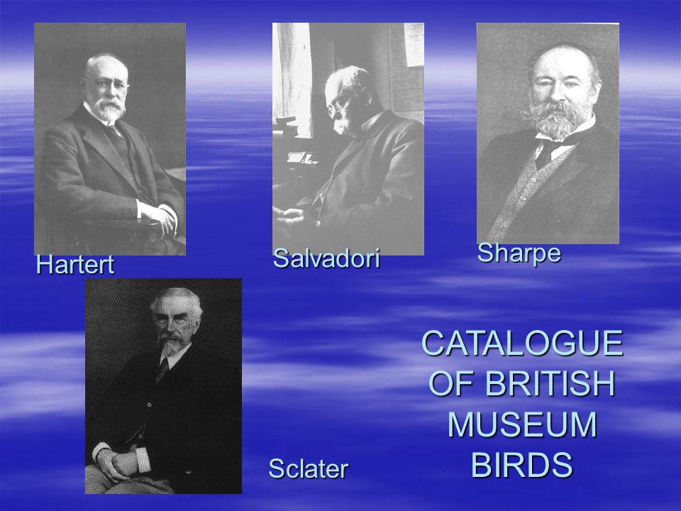 Sharpe Salvadori Hartert CATALOGUE OF BRITISH MUSEUM BIRDS Sclater