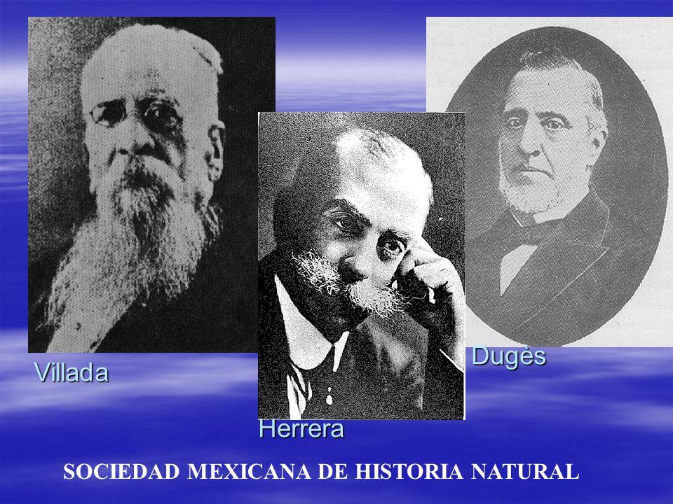 Dugès Villada Herrera SOCIEDAD MEXICANA DE HISTORIA NATURAL