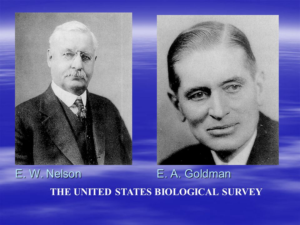 E. W. Nelson E. A. Goldman THE UNITED STATES BIOLOGICAL SURVEY