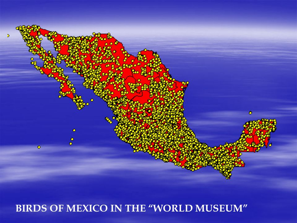 BIRDS OF MEXICO IN THE WORLD MUSEUM