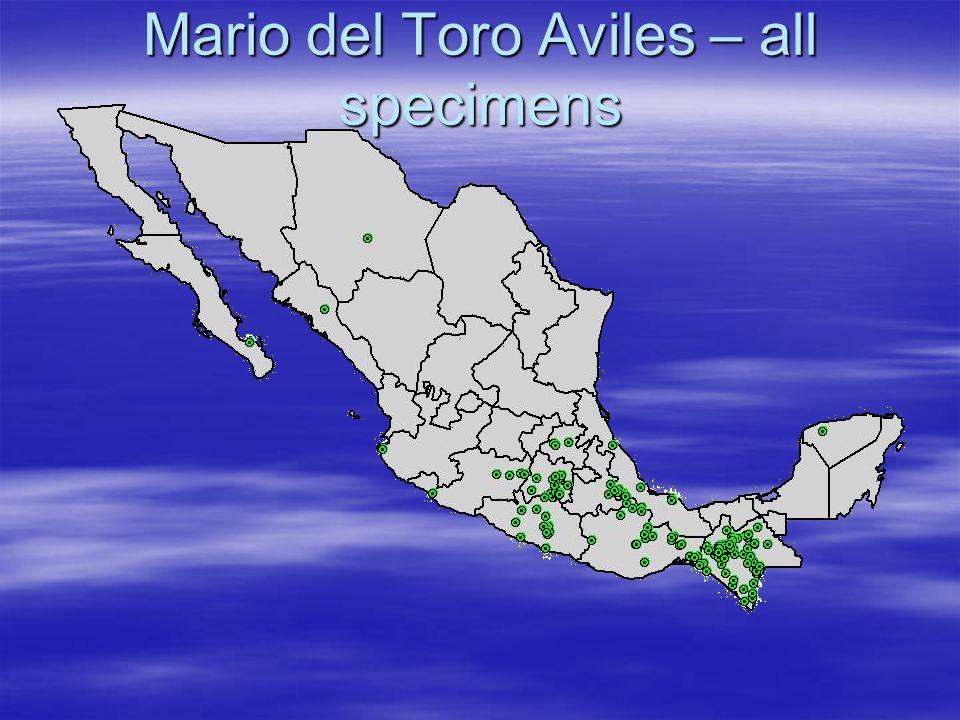 Mario del Toro Aviles – all specimens