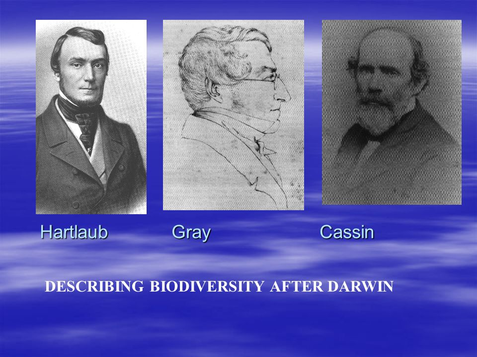 Hartlaub Gray Cassin DESCRIBING BIODIVERSITY AFTER DARWIN