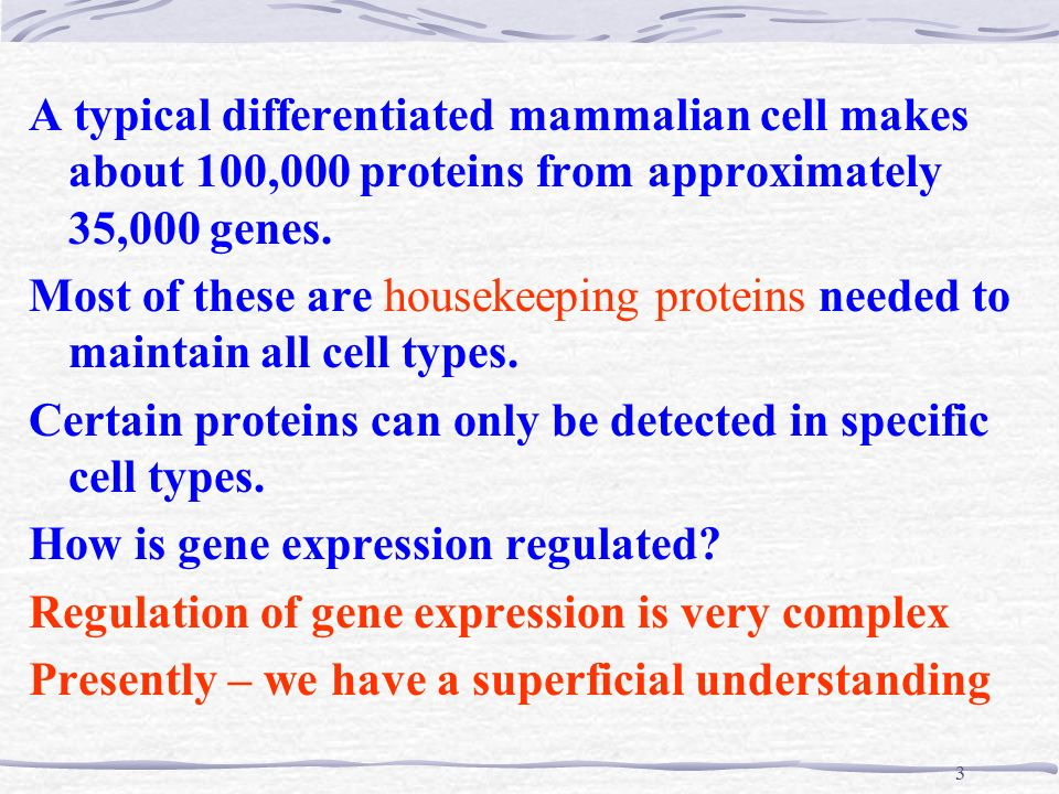 the hierarchical regulation of gene expression in mammalian cells The bai lab uses a variety of strategies to understand the we are using budding yeast as our primary model system, but we are venturing into the mammalian cells as well method-wise, we are using a china manyu's work, long-distance regulation of gene expression in.