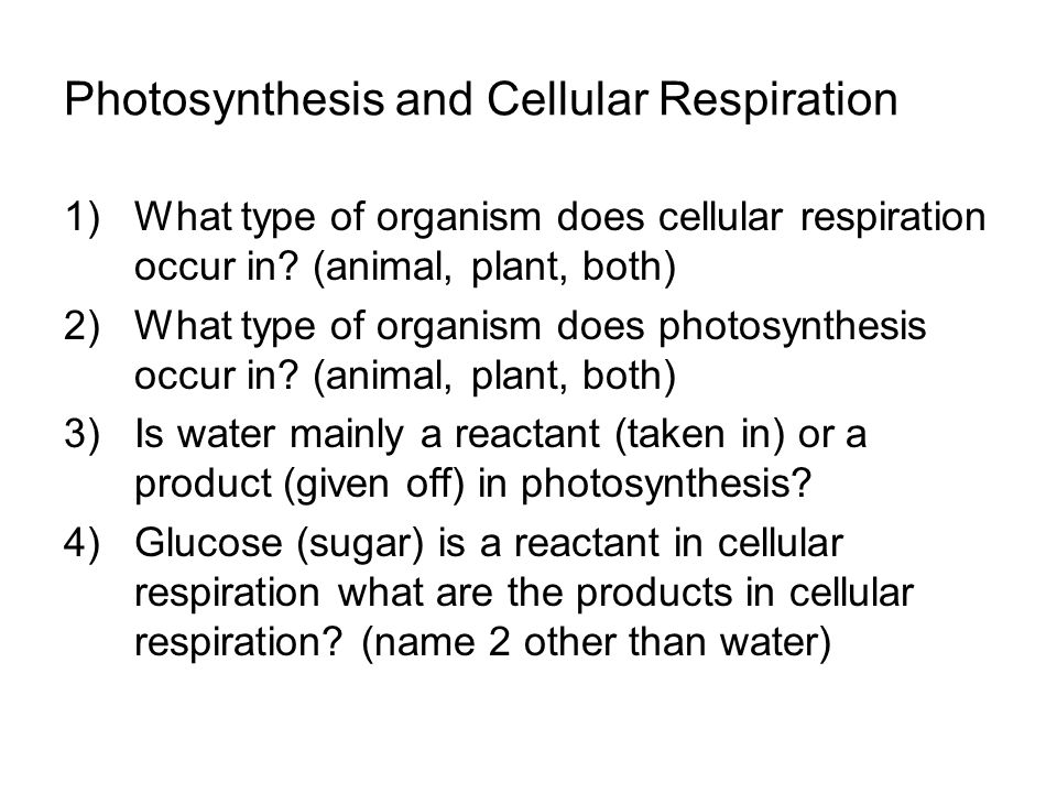 an analysis of the rate of cellular respiration in a given organism The raw materials and products of respiration choosing from the list given on the website food supply to generate atp, and the rate of cellular respiration analysis of results i.