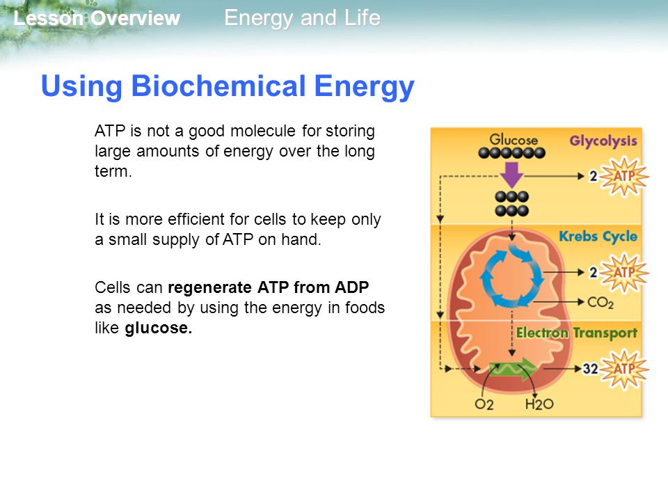 Using Biochemical Energy