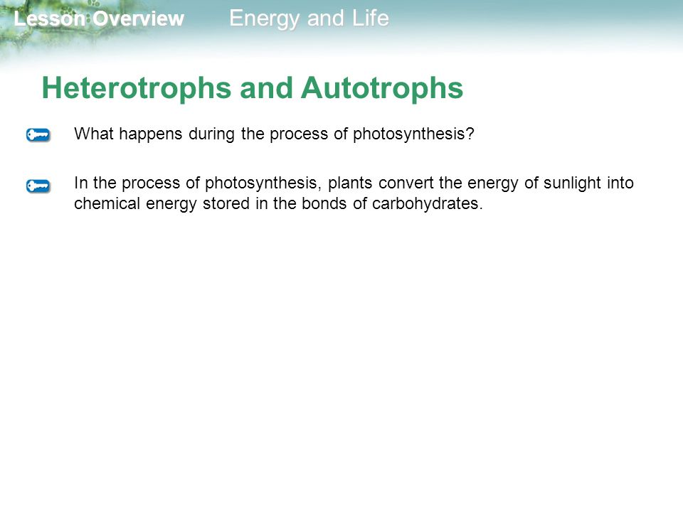 Heterotrophs and Autotrophs