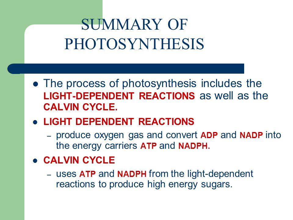 summarize the process of photosynthesis 4:37 lesson summary  let's remind ourselves of the products and reactants for photosynthesis in this process, remember that light energy, carbon dioxide, and water are used to produce glucose .