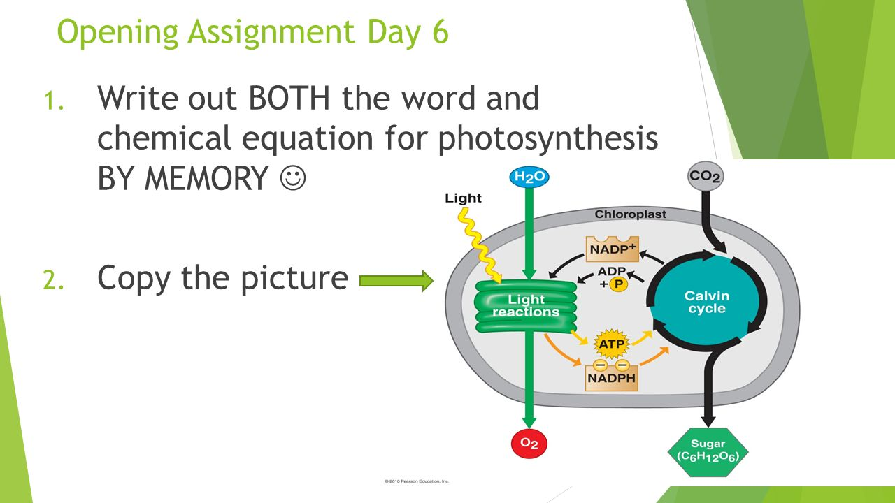 photosynthesis abstract assignment View homework help - assignment #6docx from biol 111 at texas a&m photosynthesis: cellular respiration, a spectrums, and light intensity abstract the purpose of these experiments [(1) light.