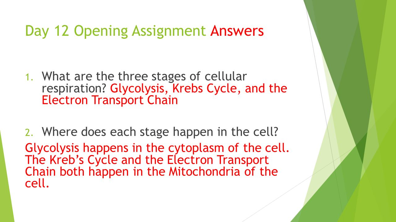 cellular respiration assignment What is the significance of cellular respiration and photosynthesis - concept 1: analyzing the processes of cellular respiration - concept 2: complete mastering biology online mini-assignment cellular respiration.