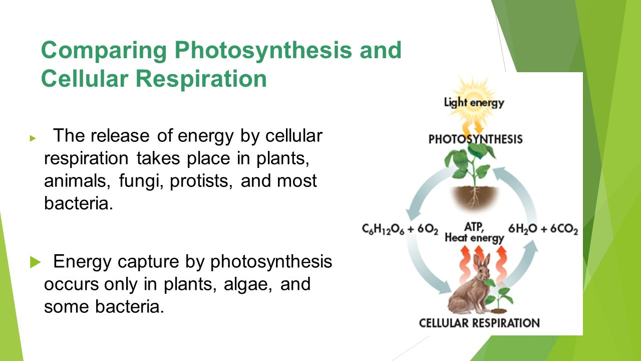 phtosynthesis and respiration
