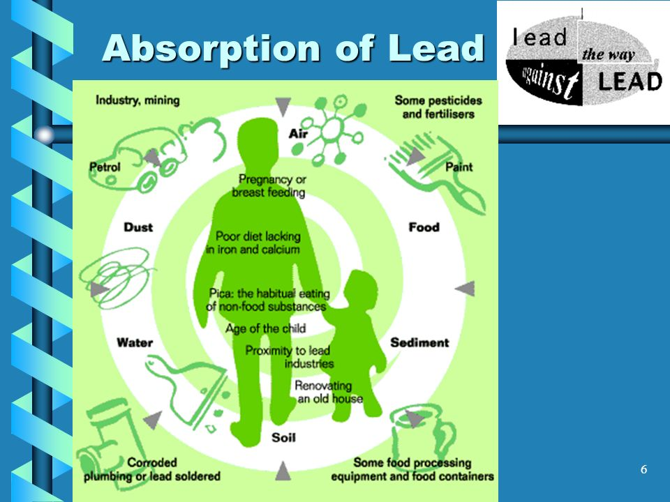 Absorption of Lead