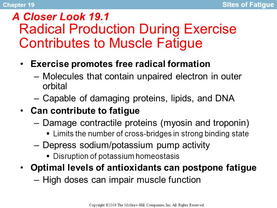 Sites of Fatigue A Closer Look 19.1 Radical Production During Exercise Contributes to Muscle Fatigue.