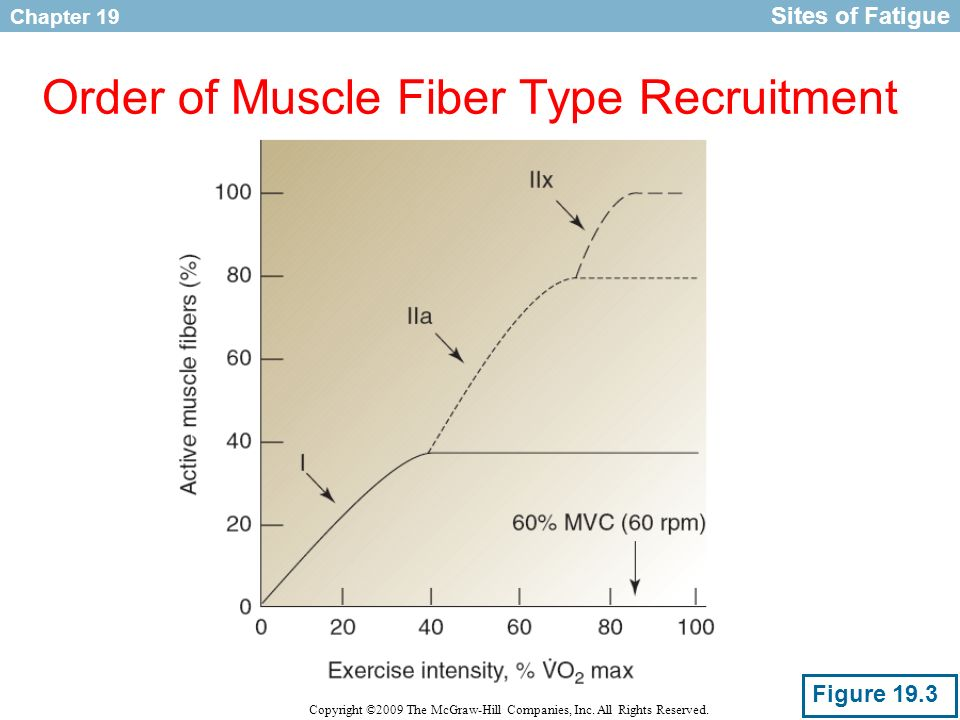 Order of Muscle Fiber Type Recruitment