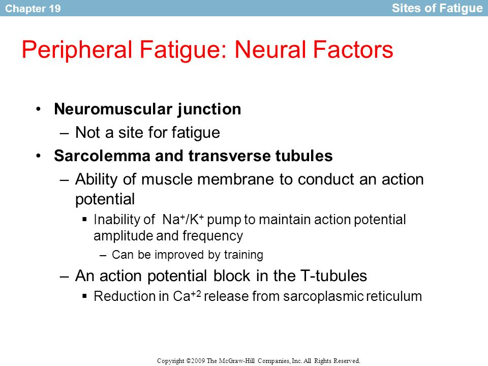 Peripheral Fatigue: Neural Factors