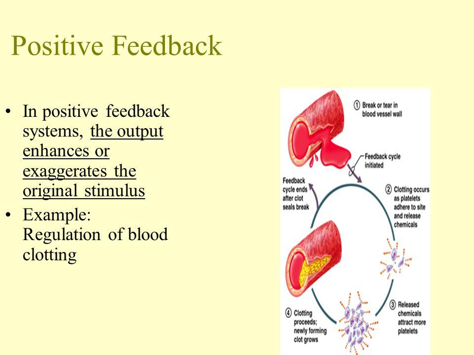 Positive Feedback In Anatomy