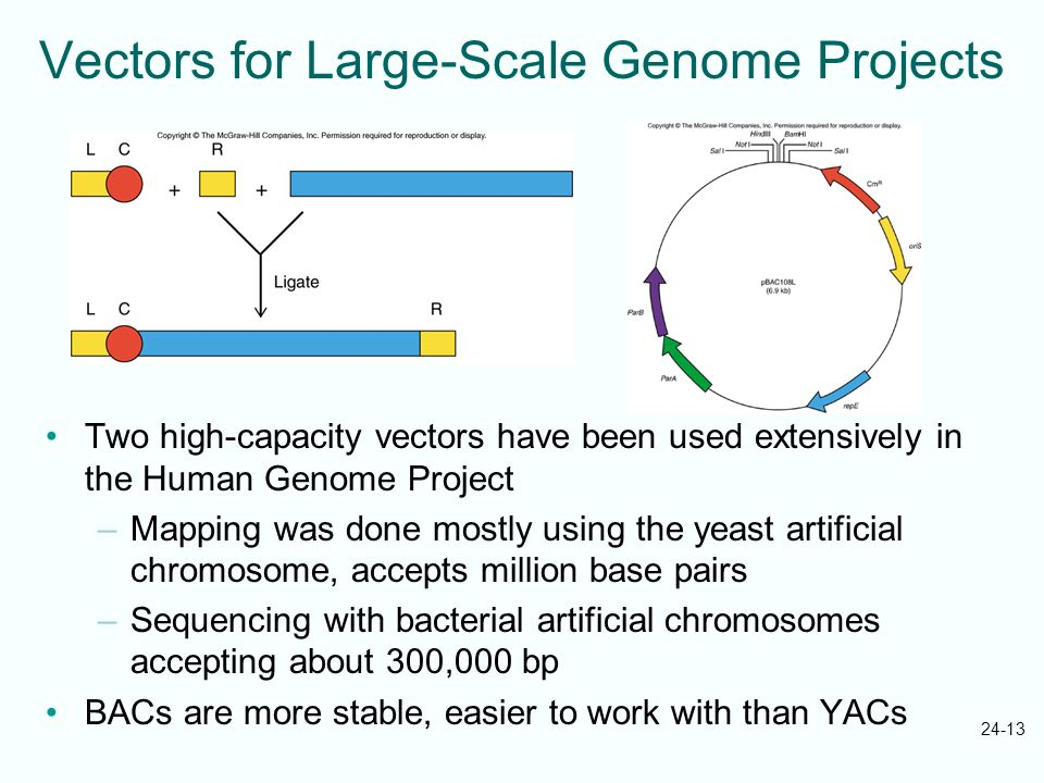 Vectors for Large-Scale Genome Projects