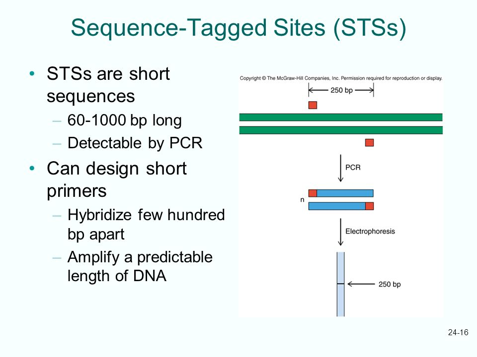 Sequence-Tagged Sites (STSs)