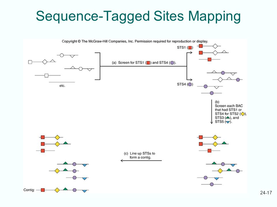 Sequence-Tagged Sites Mapping