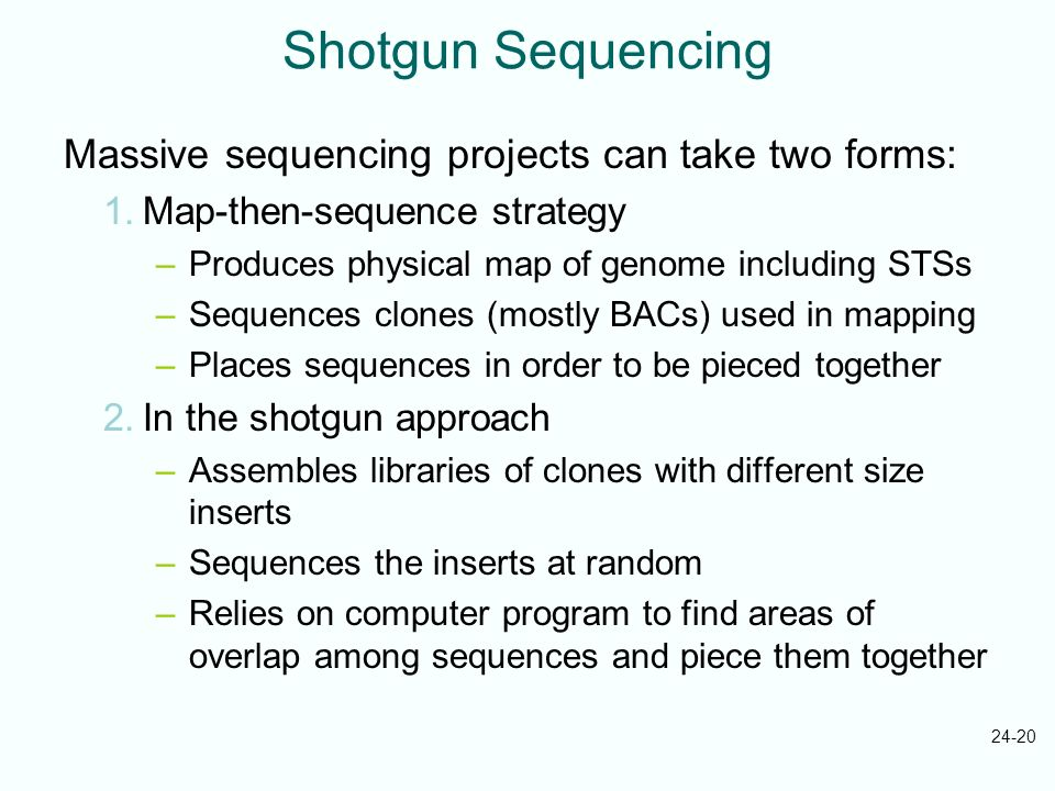 Shotgun Sequencing Massive sequencing projects can take two forms: