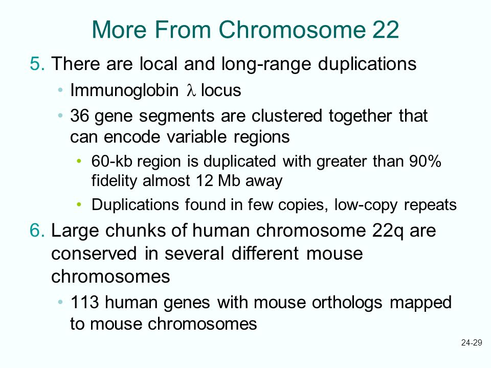 More From Chromosome 22 There are local and long-range duplications