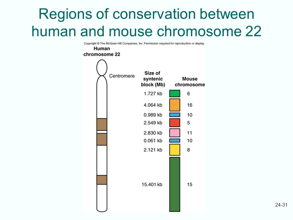 Regions of conservation between human and mouse chromosome 22