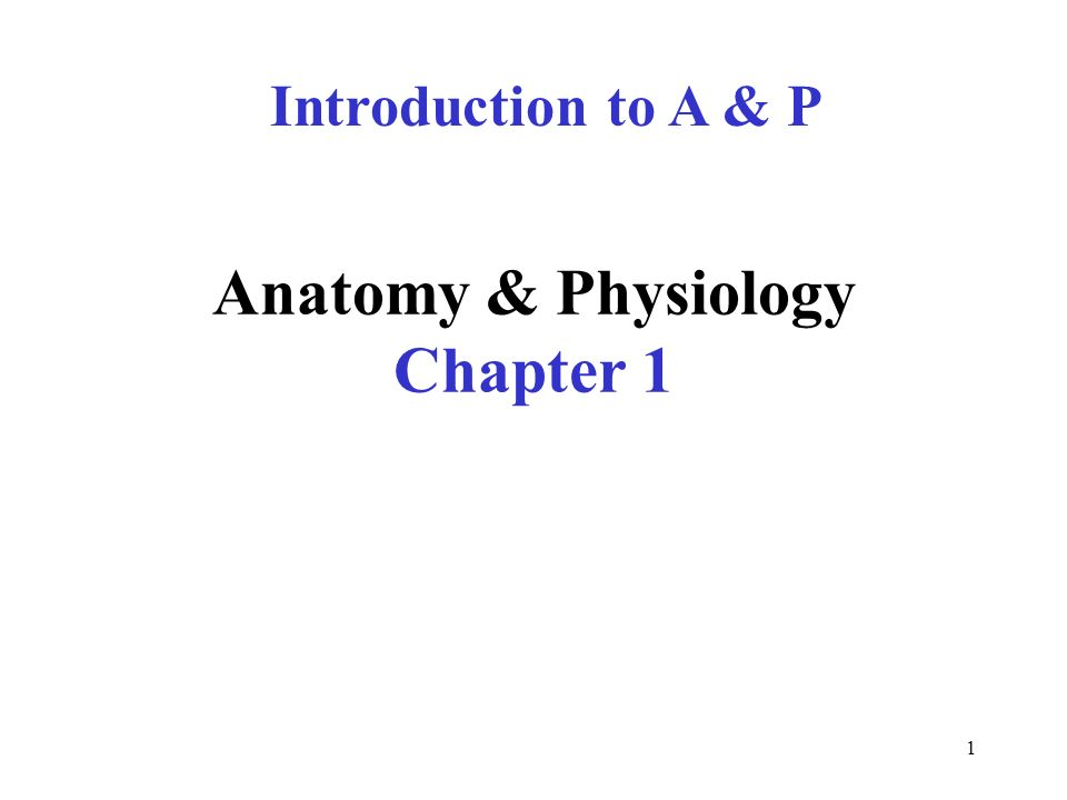Anatomy Physiology Chapter 1 Ppt Video Online Download
