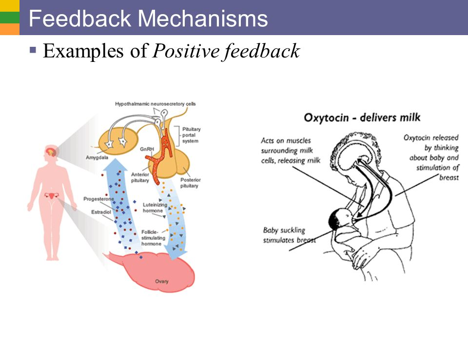 positive feedback Positive feedback is a self-amplifying process where a stimulus or change leads to even greater change in the same direction for example, if a blood.