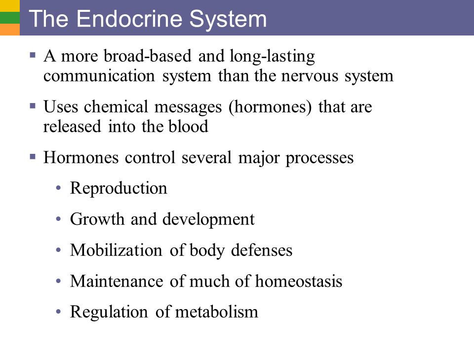 endocrine system communication The endocrine system acts as a communication tool for the human body, working in tandem with the nervous system to communicate with the body's other internal systems.