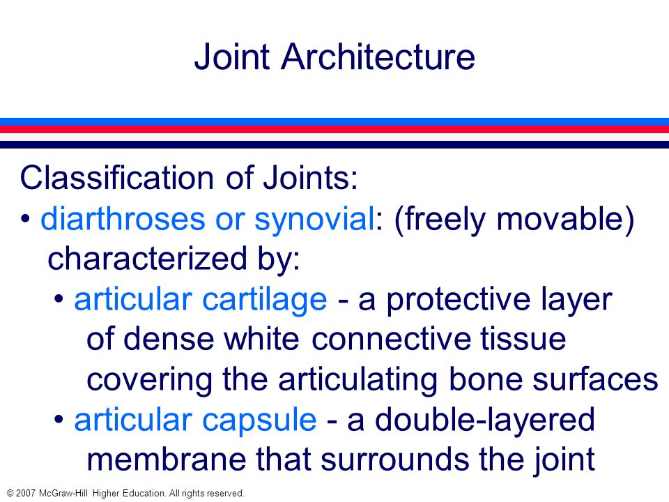 Joint Architecture Classification of Joints: