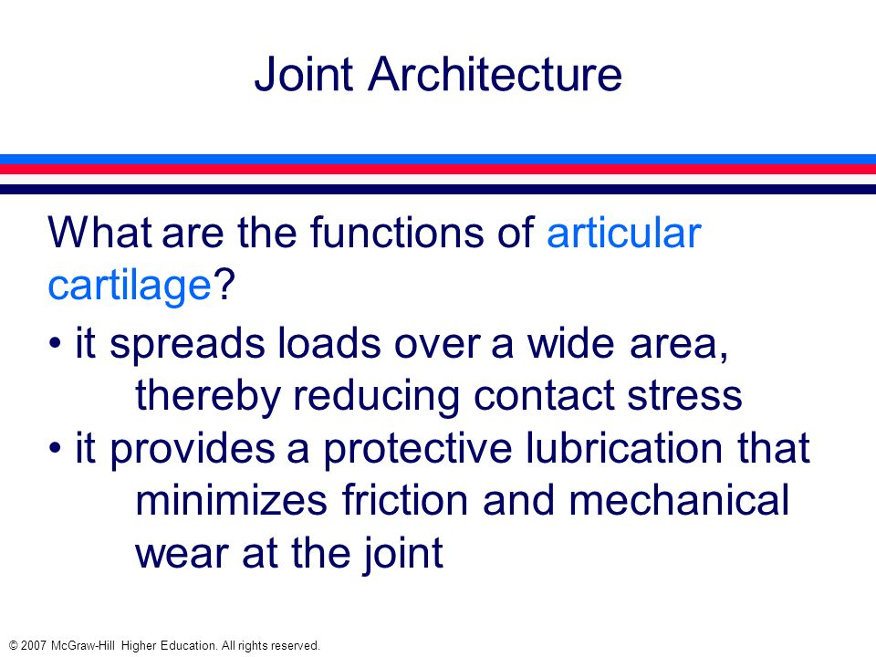 Joint Architecture What are the functions of articular cartilage
