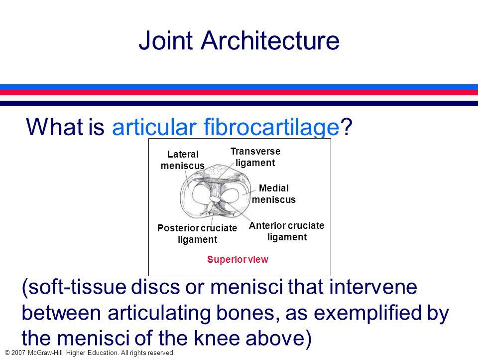 Posterior cruciate ligament Anterior cruciate ligament