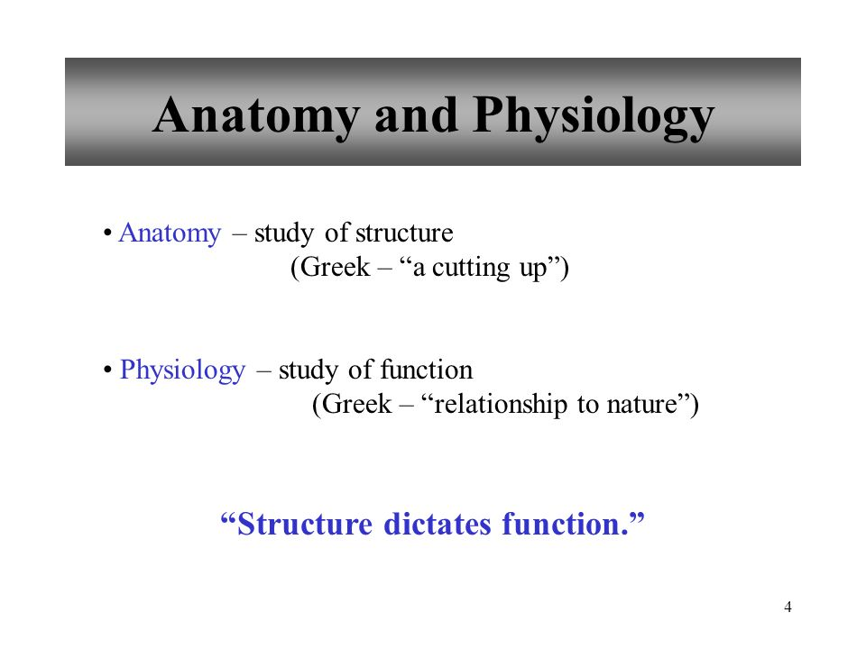 Chapter 1 Introduction to Human Anatomy & Physiology - ppt video ...