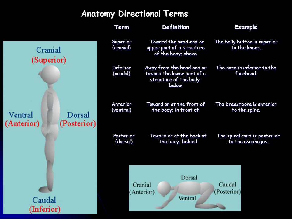 The Human Body An Orientation Ppt Video Online Download