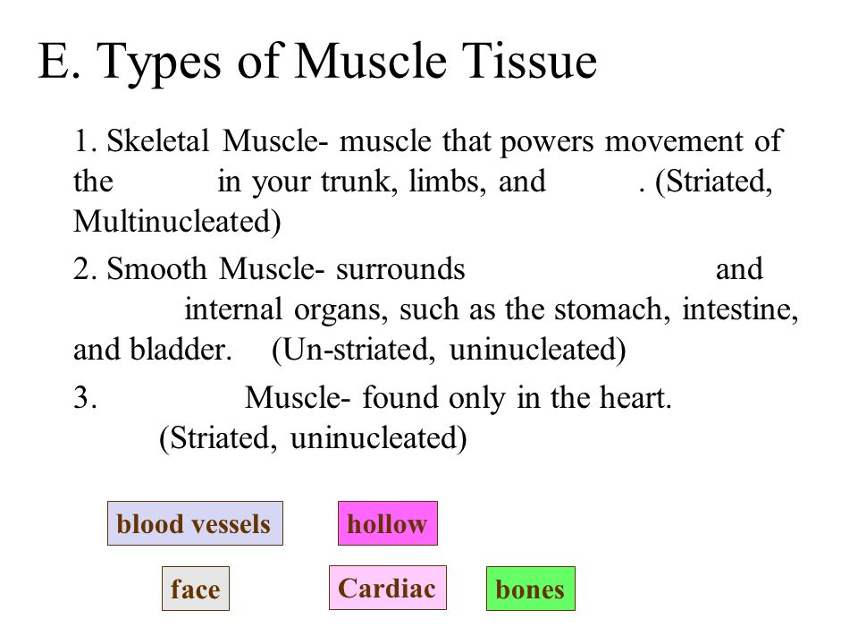 E. Types of Muscle Tissue