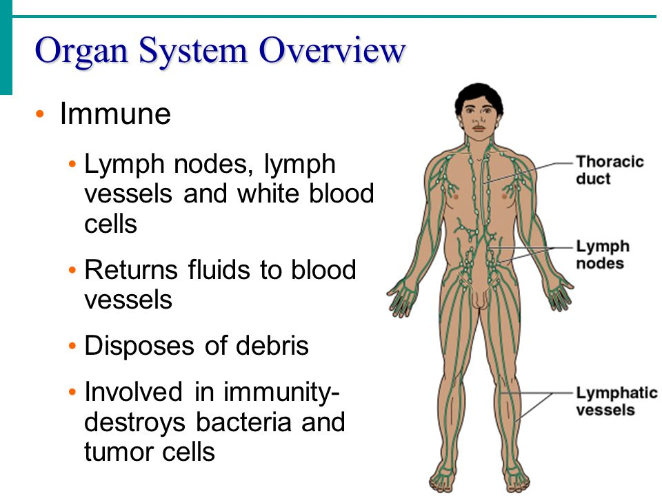 Organ System Overview Immune