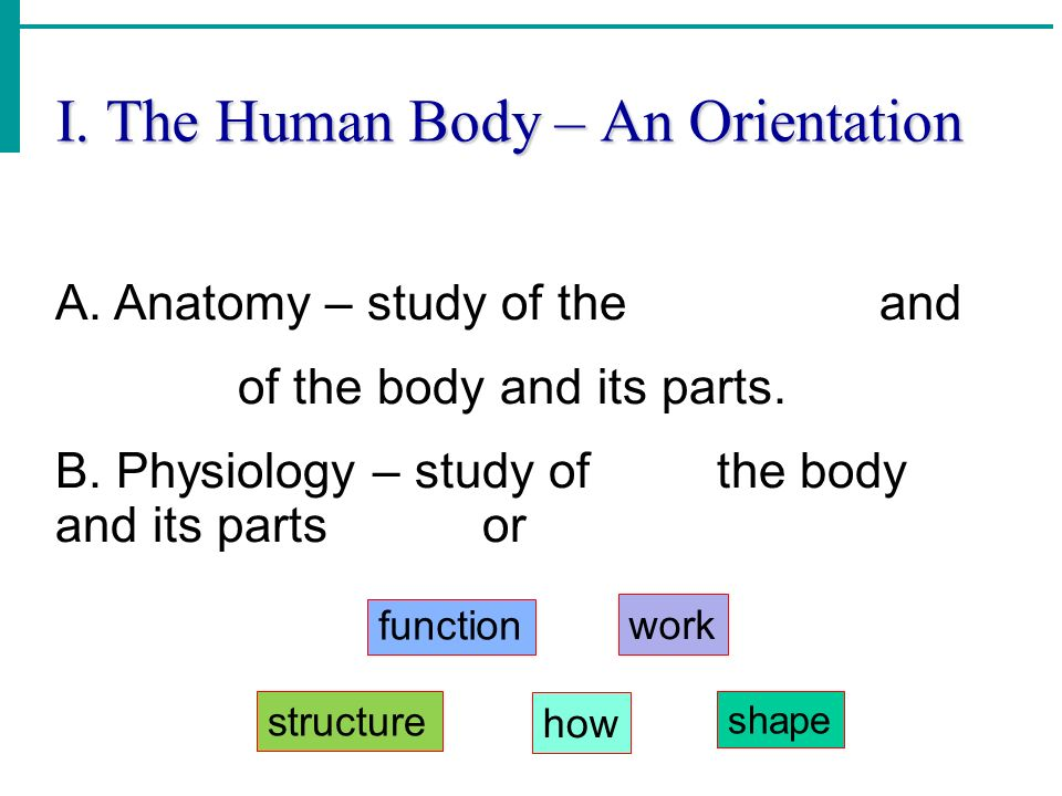 I. The Human Body – An Orientation