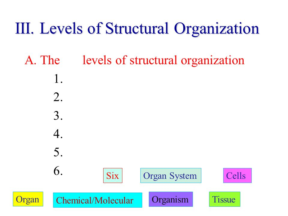 III. Levels of Structural Organization