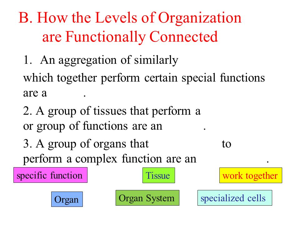 B. How the Levels of Organization are Functionally Connected