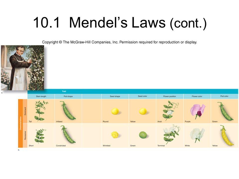 10.1 Mendel's Laws (cont.)