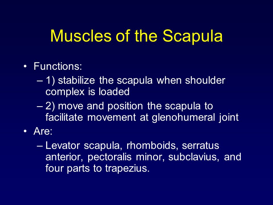 Muscles of the Scapula Functions:
